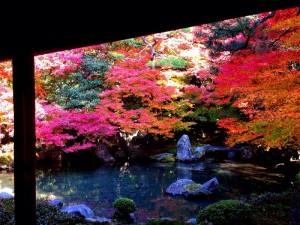蓮華寺の中庭