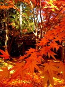 蓮華寺の庭