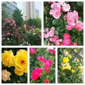 PhotoGrid_1463442085525