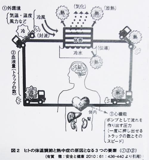 ヒトの体温調節と熱中症の原因となる3つの要素